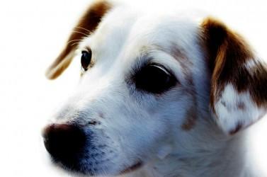 Laissez vos animaux de compagnies à un professionnel de la garde d'animaux.