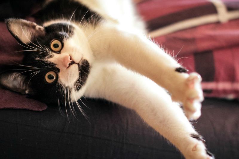 La présence d'un professionnel de la garde d'animaux empêchera votre chat de faire des bêtises.